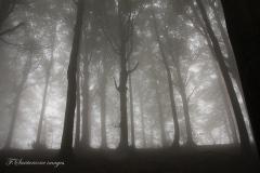 foresta sul crinale