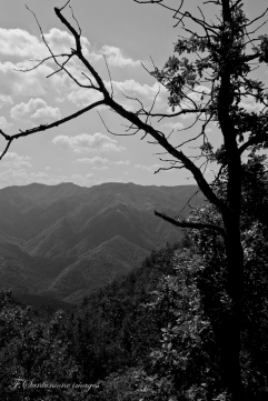 vista sul monte Tiravento