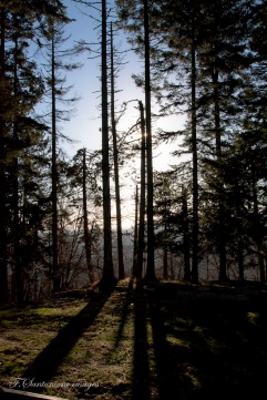 alba al poggio Cavallaro